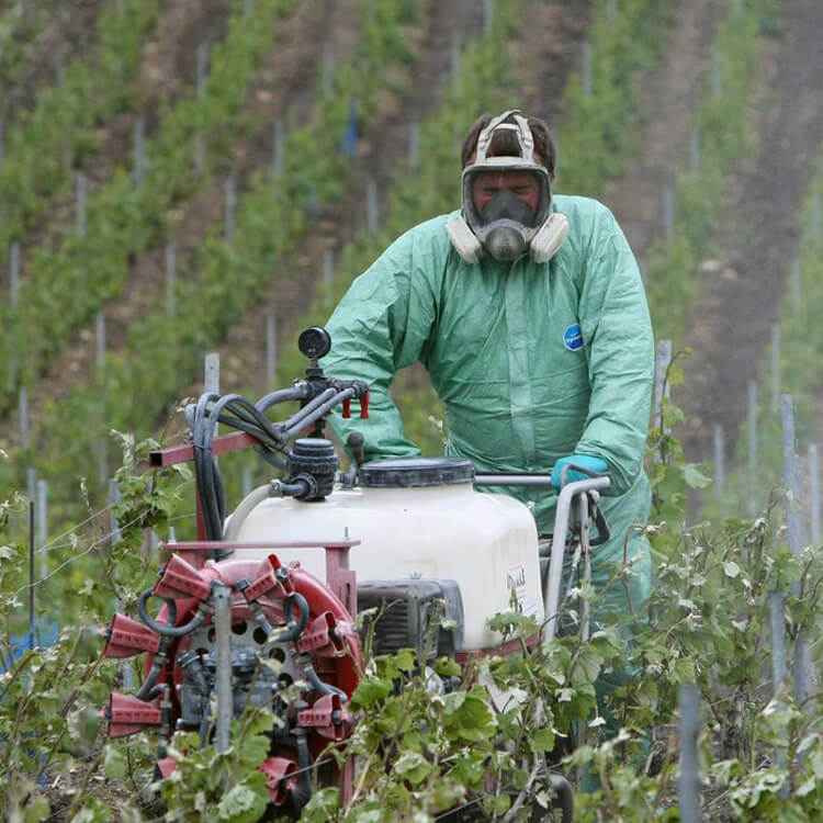 viti-vinicole